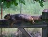 Quite ~ Lazy Saturday