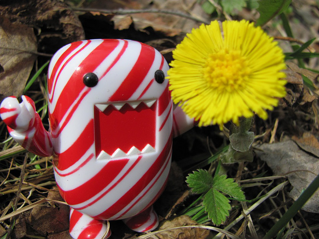 Domo and a coltsfoot