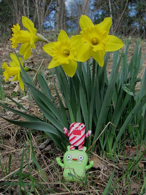 Jeero, Domo and daffodils