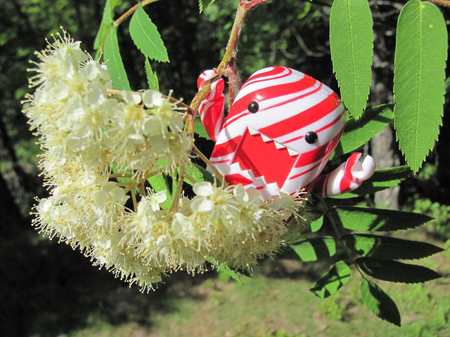 Domo in a mountain ash