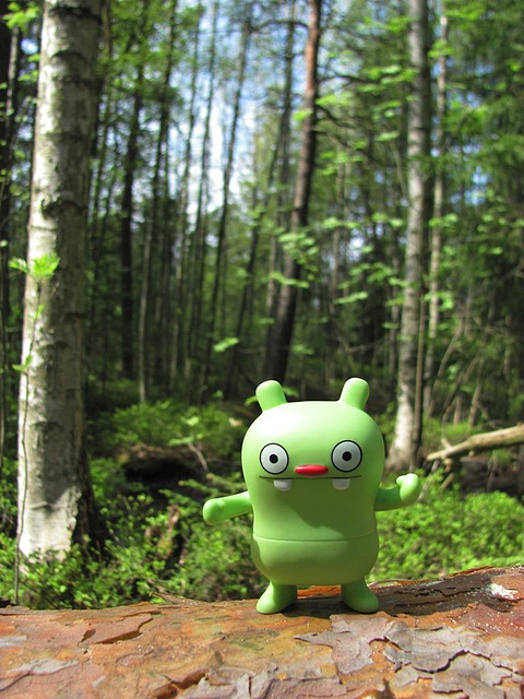 Jeero in a forest