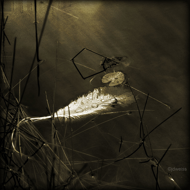 feather in the reeds
