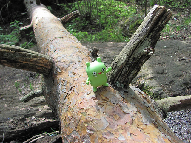 Jeero and a fallen tree
