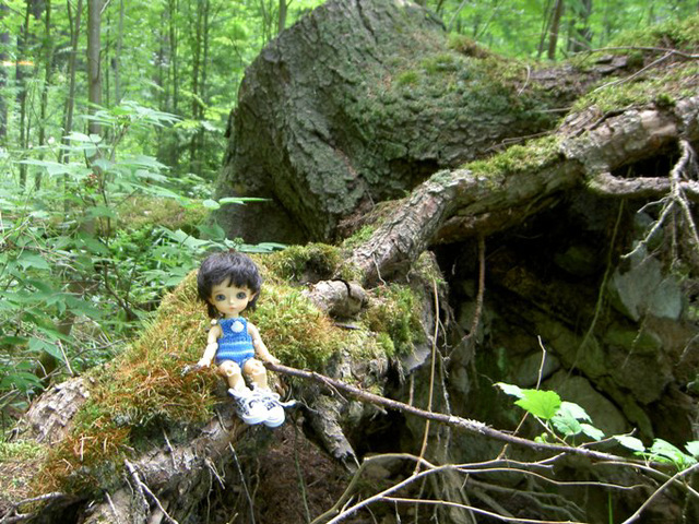 Algol in the forest