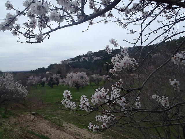 Le Rocher des BAUX  27 02 2014 046