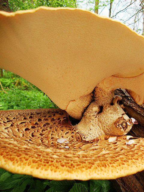 Dryads Saddle between the tiers