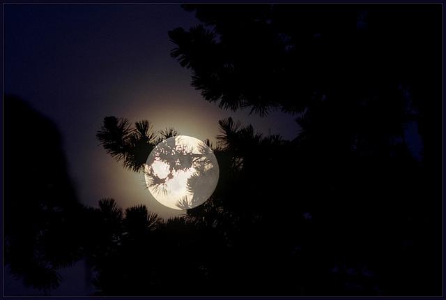 Halo.... la lune