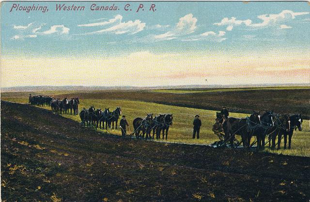 Ploughing, Western Canada. C. P. R.