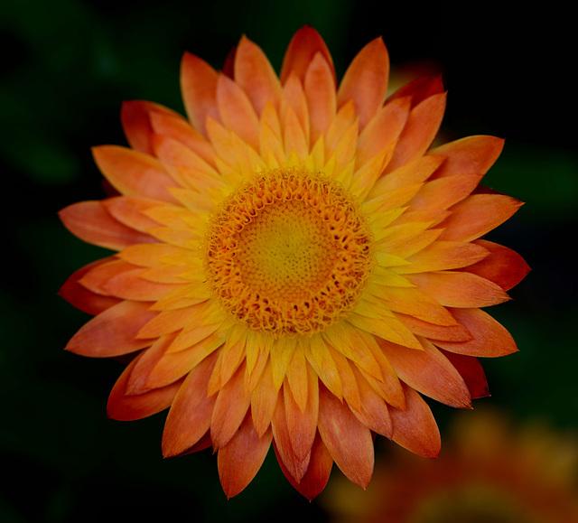 Macro sur une fleur...