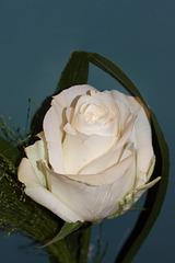 Rose - Dekoration