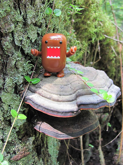 Domo and fungus