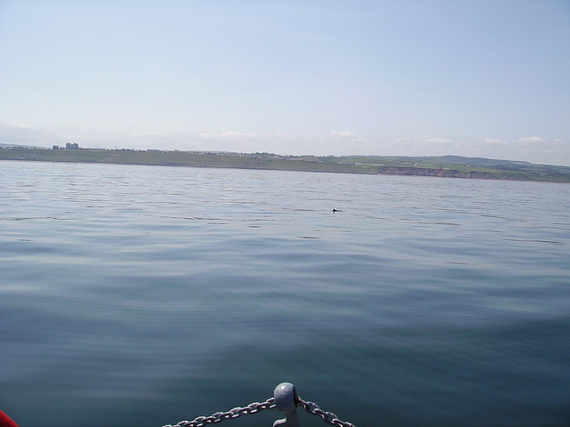 oaw - porpoise off Whitby