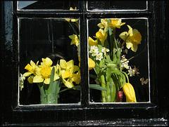 spring flowers in a window