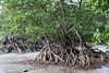 Magnificent roots