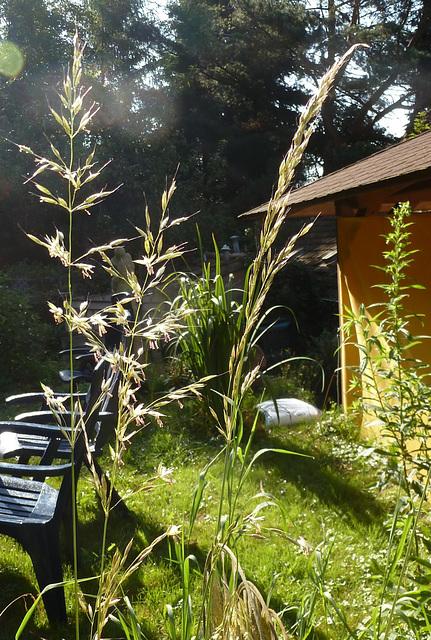 Kleine Freude am Sommermorgen - eta ĝojo somermatene