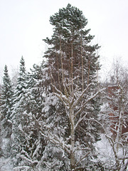 Needle tree