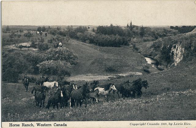 Horse Ranch, Western Canada