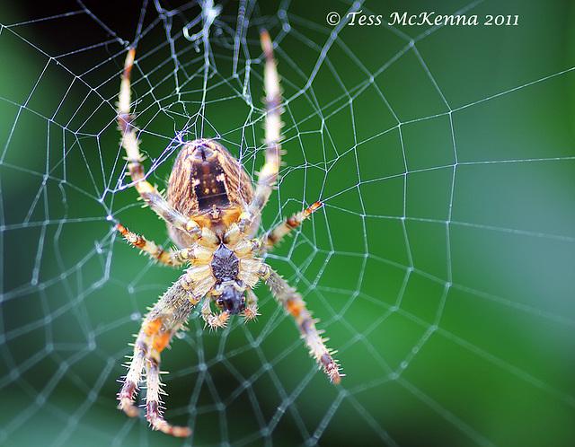 Macro Spider 3 Explore 047 copy 2