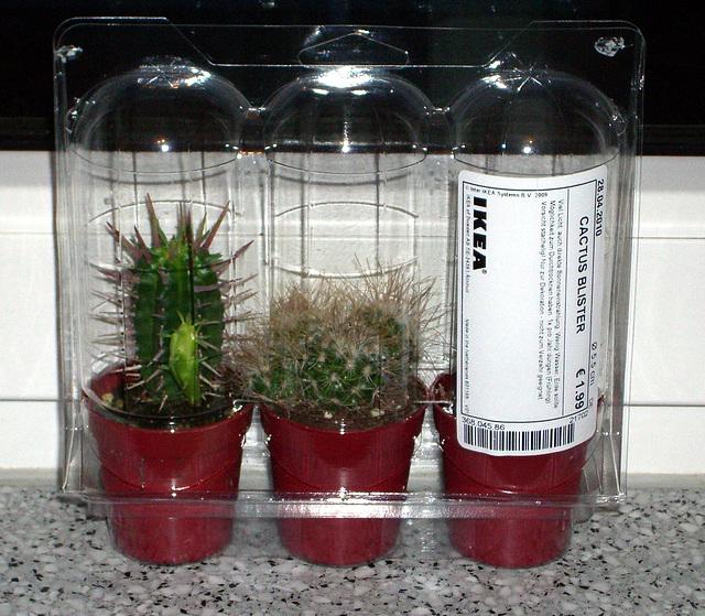 IKEA - 3 cacti