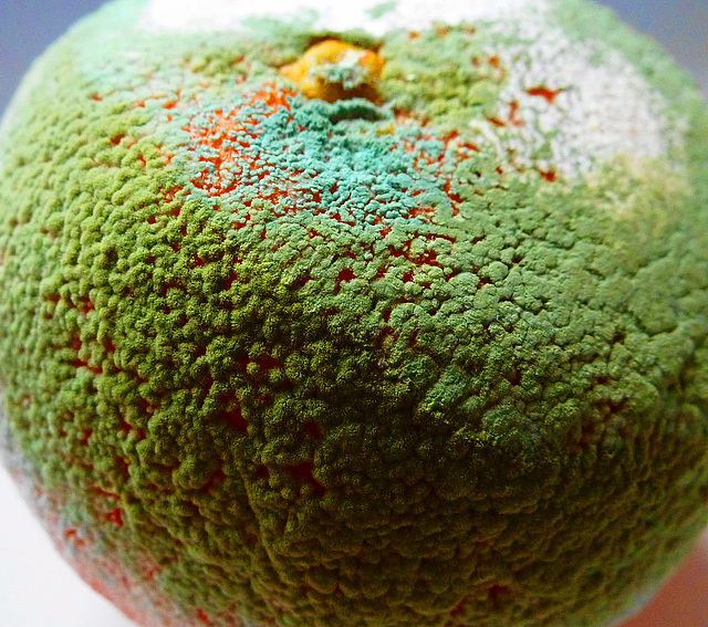 Mouldy Clementine 3