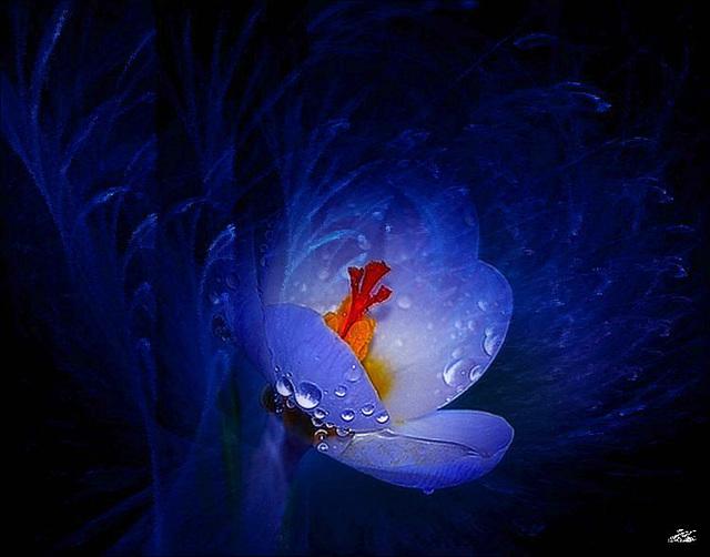 Rien n'aurait plus d'importance  ............Que la beauté du silence