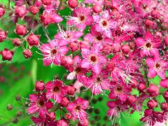 Some sort of flower