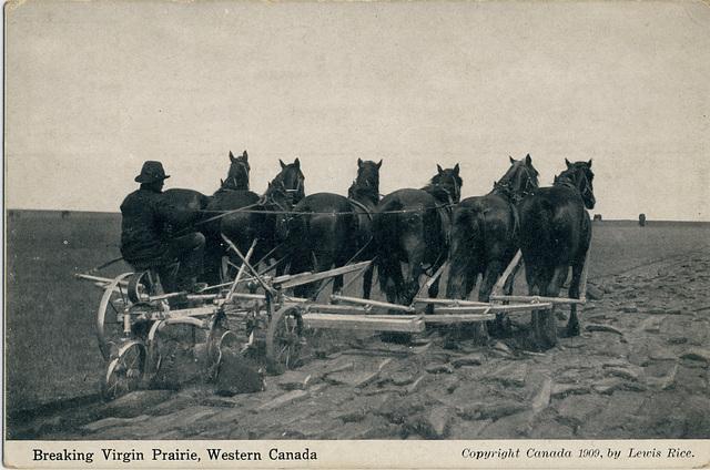 Breaking Virgin Prairie, Western Canada