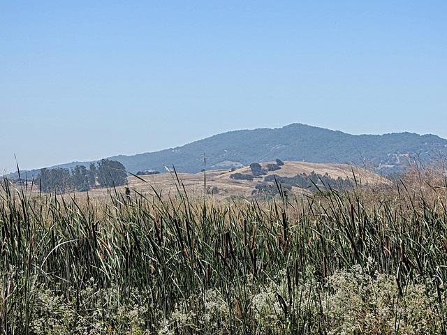 Petaluma Marsh Wildlife Area