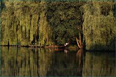 Sur le grand canal de Chantilly