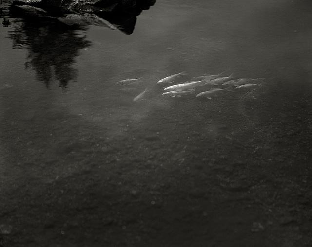 Saint Petersburg, pond.