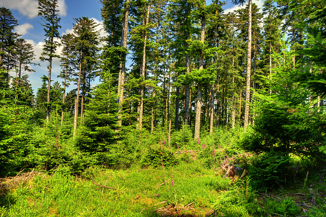 hdr foret