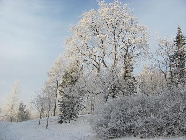 A frosty park