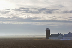 Foggy Farmland Morning