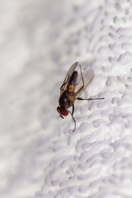 Nervige Fliege - 20130713