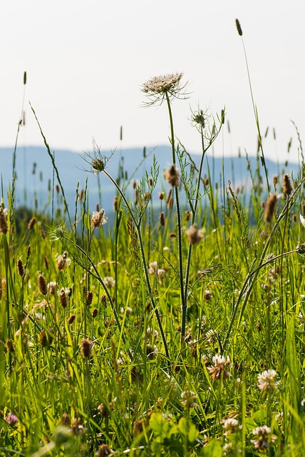 Sommerwiese - 20130714