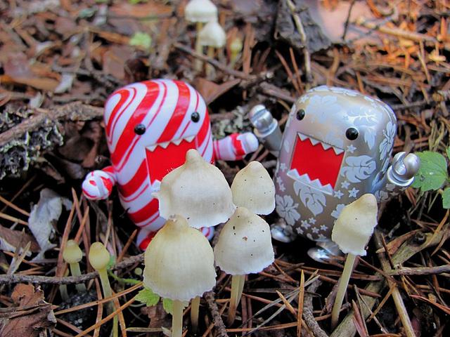 Tiny mushrooms