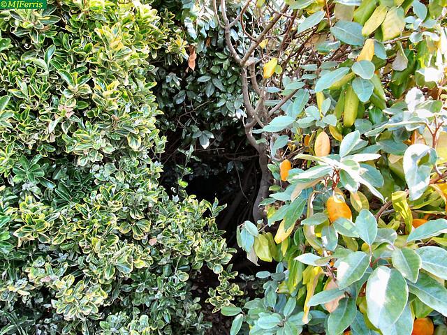 09 Hidden path