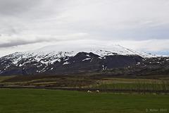 Snæfellsjökull (1446 m)