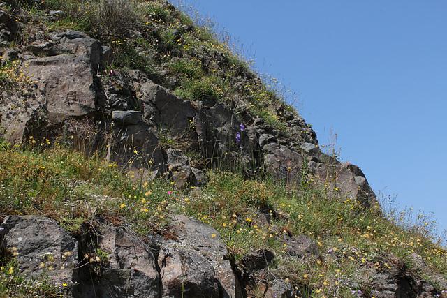 Rochers et talus fleuris (2)