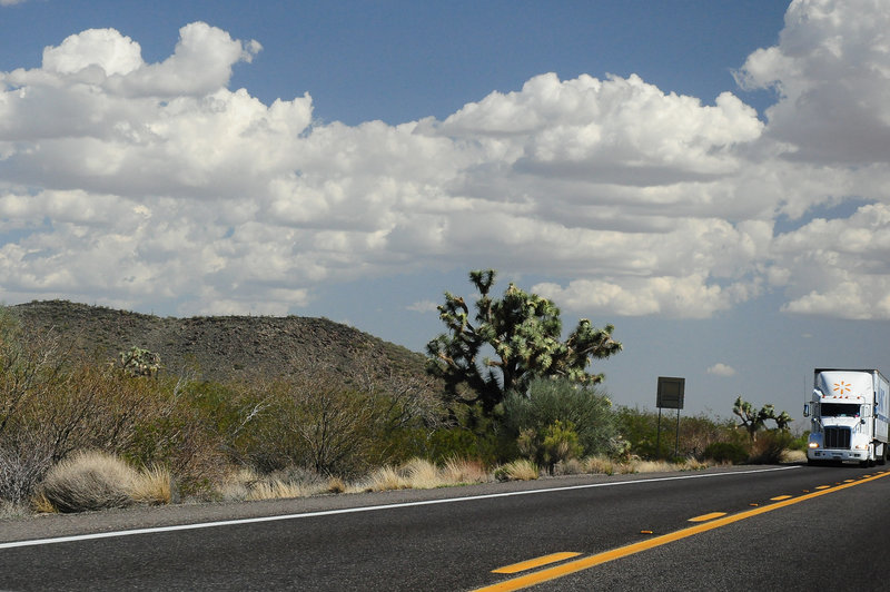 """""""Joshua Tree Parkway"""""""