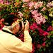 Hampton Court Flower Show Digilux 2 Photographer