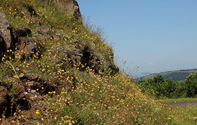 Rochers et talus fleuris (3)