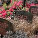 Hampton Court Flower Show Digilux 2 RIP