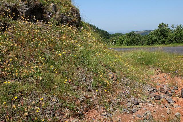 Rochers et talus fleuris (4)
