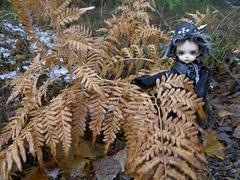 Deimos and dead ferns