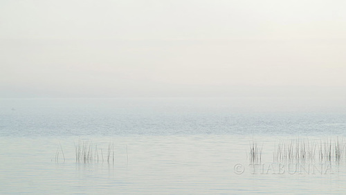 Foggy dawn, Lake Albert