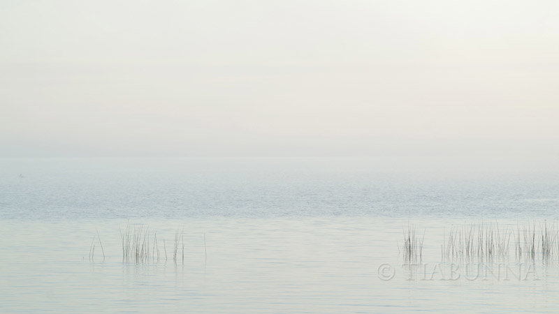 Foggy dawn, Lake Albert