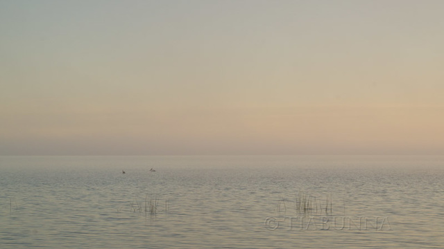 Daybreak, Lake Albert