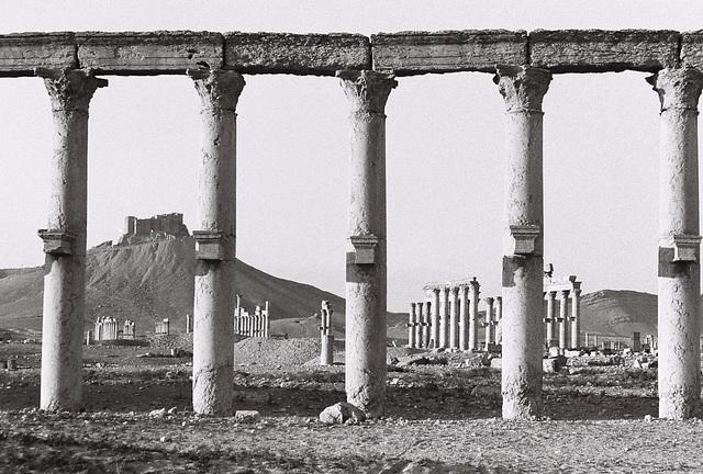 Palmyra, Syria, Christmas Day 2010