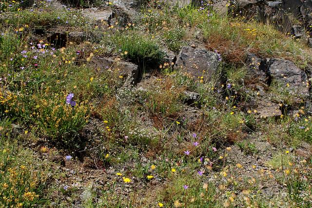 Rochers et talus fleuris (5)